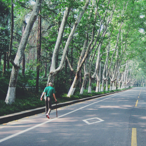 Man walking down tree-lined road