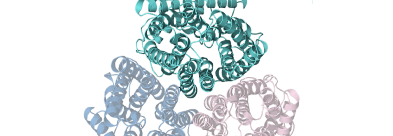 Overhead view of the protein structure of Amt