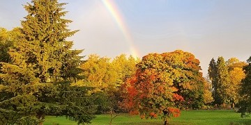 View of autumn trees with bright sky and rainbow