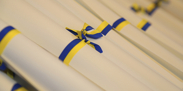 Degree parchments tied in yellow and blue ribbon