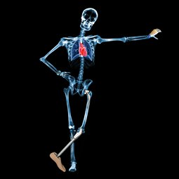 Biomedical Engineering - Skeleton